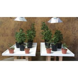 Faux Marijuana Grow House - OPFOR Solutions